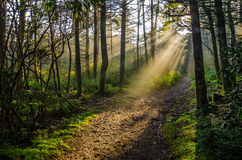 Roan Mountain, Crepuscular rays, Tennessee forest. Crepuscular light rays through the forest canopy along one of the many hiking trails at Roan Mountain State stock image