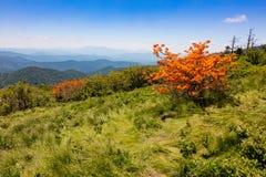 Roan Mountain Stock Photos