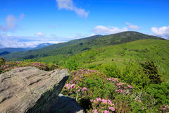 Roan Mountain Highlands North Carolina stock afbeelding