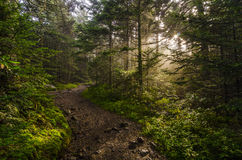 Roan Mountain, Schemerige stralen, het bos van Tennessee royalty-vrije stock afbeelding