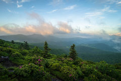Roan Mountain Spring Rhododendron Blooms 3 Stock Images