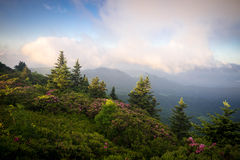 Roan Mountain Spring Rhododendron Blooms 9 Royalty Free Stock Photo