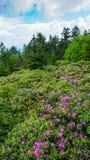 Roan Mountain State Park Gardens TN Stock Afbeeldingen
