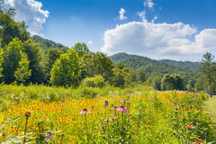 Roan Mountain State Park. Wildflowers growing at Roan Mountain State Park stock image
