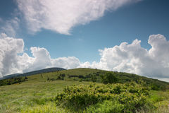 Roan Mountain. A summer hike on the Appalachian trail on Roan Mountain in the Great Smoky Mountain National Park in Tennessee royalty free stock photo