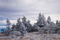 Roan Mountain Winter Hike 5 Image libre de droits