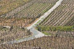 Roand in a Vineyard. Road between vineyards in Ribadavia, Galicia, Spain Stock Photo