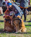 Runners and Pets Getting Ready for the Annual Roanoke Valley SPCA 5K Tail Chaser. Roanoke, VA – March 23rd: A large of group of runners, walkers and their royalty free stock photography