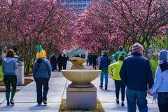 People Enjoying Elmwood Park and Elmwood Art Walk, Roanoke, Virginia, USA. Roanoke, Virginia USA – March 17th: People enjoying Elmwood Park with its stock photos