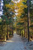 Road through colorful forest Stock Images