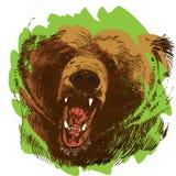 Roaring bear. Bear head. Wild bear. Brown bear head. Green life. Wild life Royalty Free Stock Photos