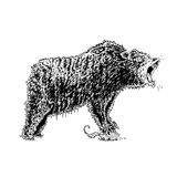 roaring bear Stock Photography