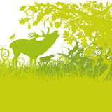 Roaring deer. In a green forest Stock Photo