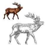 Roaring deer sketch animal with large antlers Stock Photos