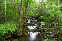 Roaring Fork Stock Photography