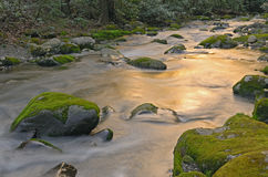 Roaring Fork Creek Stock Image