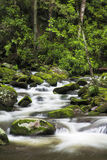 Roaring Fork Creek in the Great Smoky Mountains USA Stock Photos