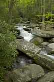 Roaring Fork, Great Smoky Mtns NP. Roaring Fork Creek, Motor Nature Trail, Great Smoky Mountains National Park, TN, USA stock photography