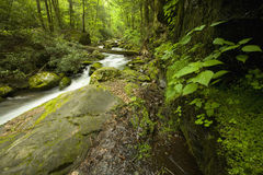 Roaring Fork, Great Smoky Mtns NP Royalty Free Stock Photography