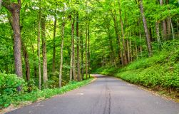 Roaring Fork Motor Nature Trail Royalty Free Stock Photo