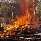 Roaring hot fire in Australian bush Royalty Free Stock Photos