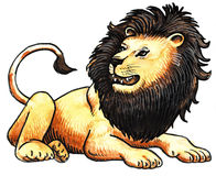Roaring lion Stock Images