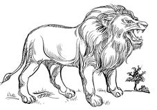 Roaring lion. Brush stroke roaring lion line art image Royalty Free Stock Photo