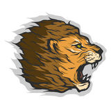 Roaring lion head. Stock Photo