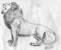 Roaring lion pencil sketch. Hand drawn pencil sketch of a lion roaring Royalty Free Stock Photography