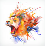 Roaring lion, vector illustration Royalty Free Stock Image