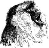 Roaring monkey. Vector image of the head of the roaring macaque Stock Photos