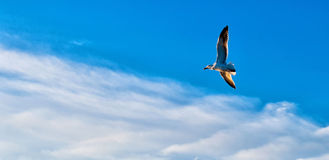 Roaring on the sky Stock Photography