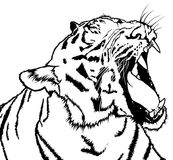Roaring Tiger. Black and White Drawing Illustration, Vector Royalty Free Stock Photos
