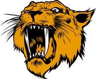 Roaring tiger. Drawing of a roaring and wild sabre-toothed tiger with long fangs Stock Image