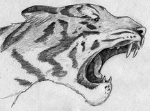 Roaring tiger. Hand drawn pencil sketch of a roading tiger Stock Photography