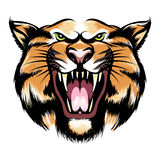 Roaring tiger head Stock Photography