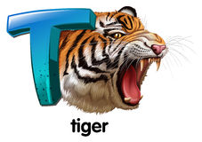 A roaring tiger Stock Images