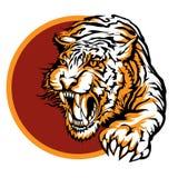 Roaring tiger logo design. Drawn in tattoo style stock illustration