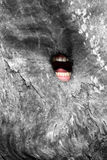 Roaring tree. Roaring mouth in the tree hole royalty free stock photography