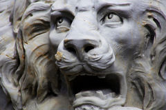 Roaring White Lion Statue. Closeup of White Lion sculpture showing lions face roaring Stock Photography