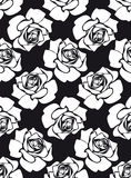 roases无缝的白色 免版税库存图片