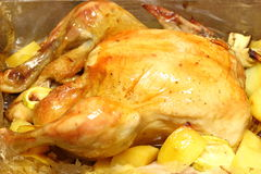 Roast chicken into a oven bag Royalty Free Stock Photos