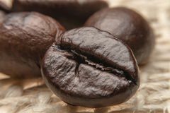 Roast coffee beans. Isolated on sack background Royalty Free Stock Photos
