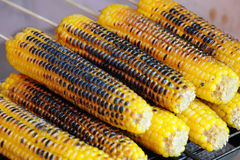 Roast corn Royalty Free Stock Photo