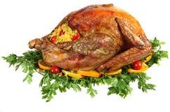 roast Τουρκία χορταριών σπορ&epsilo Στοκ εικόνες με δικαίωμα ελεύθερης χρήσης