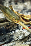 Roast fish on campfire Stock Photo