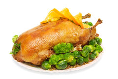 Roast goose stuffed with buckwheat porridge Stock Photo