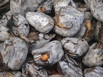 Roast nuts royalty free stock photography