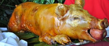 Roast Pig Royalty Free Stock Photos
