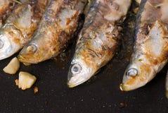 Roast sardines Royalty Free Stock Photos